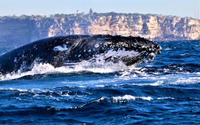 Drones, Whales and Her PhD Pursuit